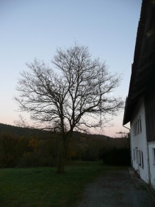 Praxisbaum 2